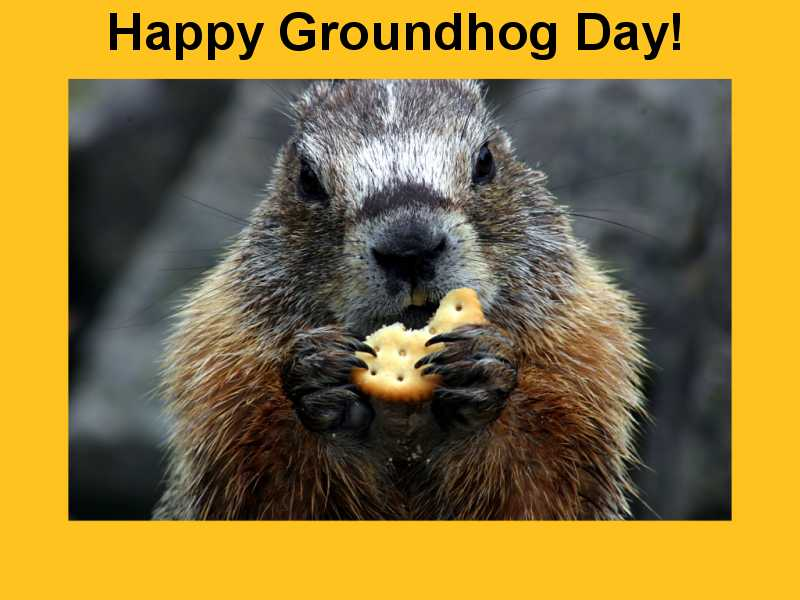 Have A Great Day Happy Groundhog Day Wishes