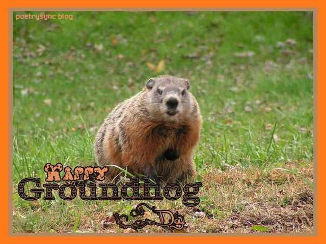 Have A Wonderful Groundhog Day Wishes Image