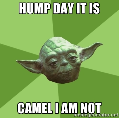 Hump Day Its Camel I Am not Meme Photo