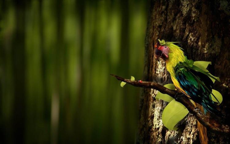 Incredible Bird Front Of Bird Wallpaper