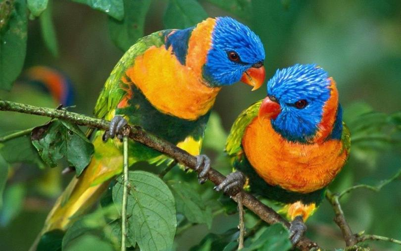 Incredible Colorful Parrots Looks Cute Together