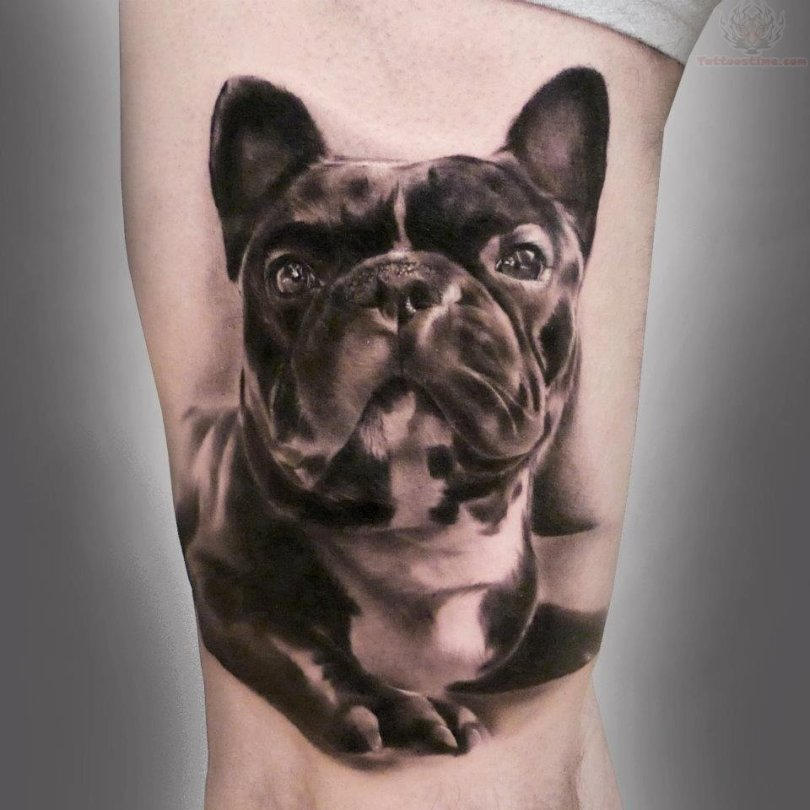 Maori French Bull Dog Tattoo Design For Girls
