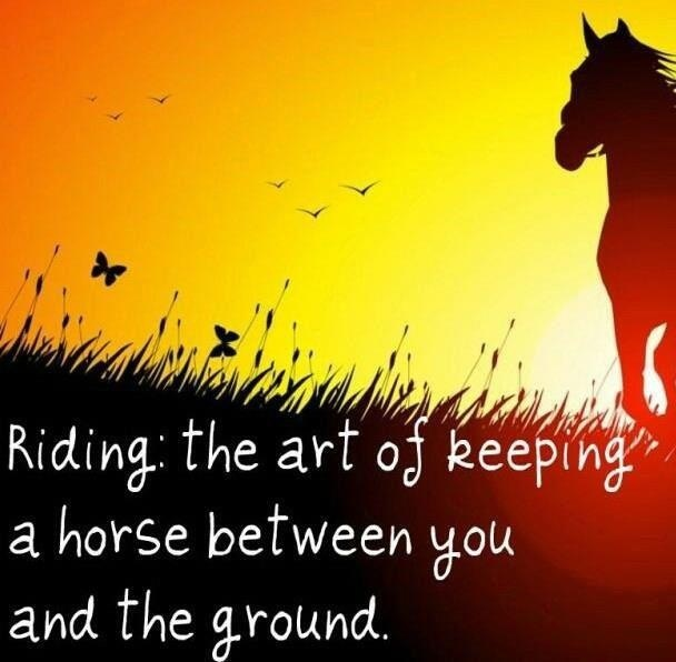 Ride Quotes Riding the art of keeping a horse between you and the ground