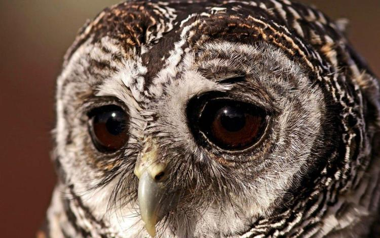 Sad Face Of A Owl Looks Great
