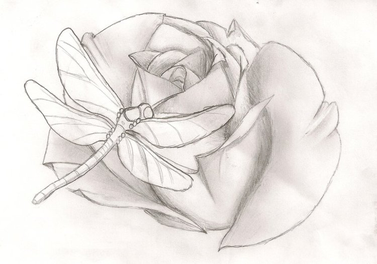 Sensation Dragonfly n Rose Tattoo Drawing For Girls