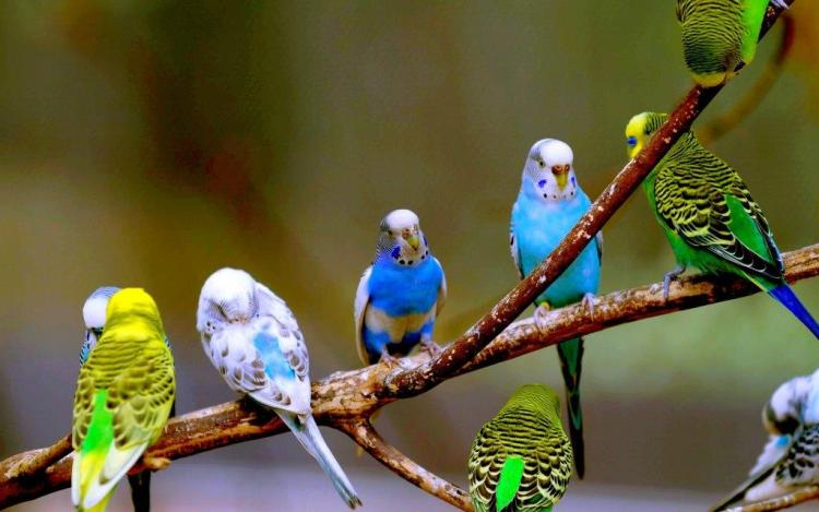Several Birds Sitting On A Tree