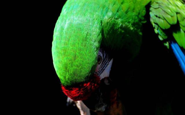 Unique Sad Look Of Parrot In Wallpaper