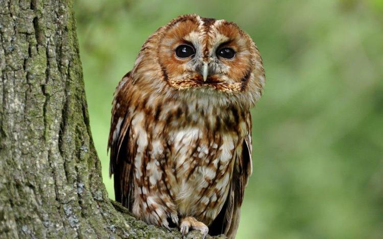 Very Funny Owl Looking In Weird Pose