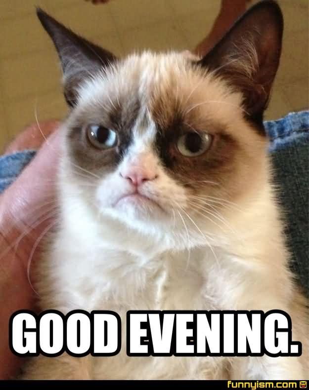 Good Evening Meme good evening (2)