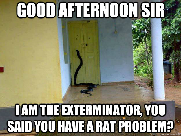 Good afternoon sir i m the exterminator Good Afternoon Meme