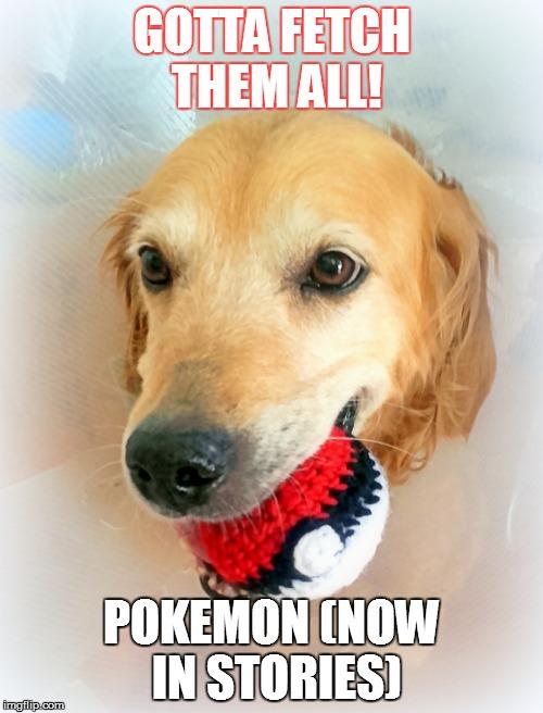 Gotta Fetch Them All! Pokemon Now In Stories Pokemon Go Memes