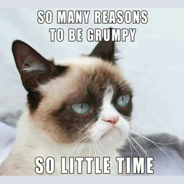 Grumpy Cat Memes So Many Reasons To Be Grumpy
