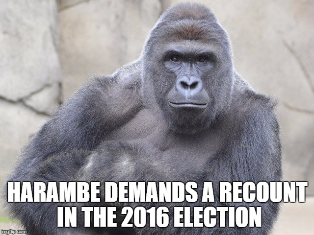 Harambe Memes Harambe Demands A Recount In The 2016 Election