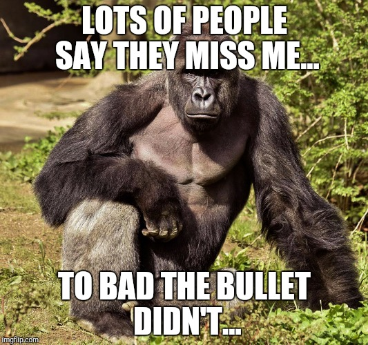 Harambe Memes Lots Of People Say They Miss Me