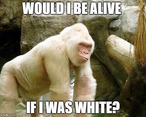 Harambe Memes Would I Be Alive If I Was White