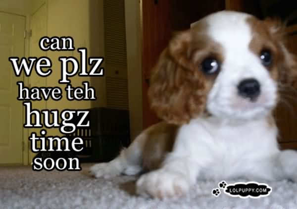Hug Memes Can We plz have teh hugz time soon