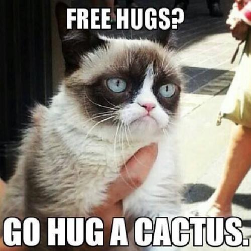 Hug Memes Free hugs go hug a cactus