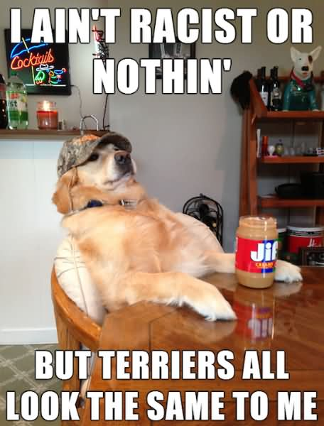 LOL Memes i aint racist or nothin but terriers all