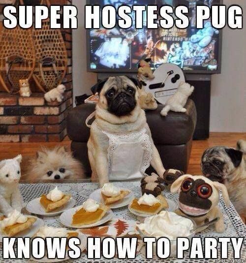 Party Memes super hostess pug knows how to party