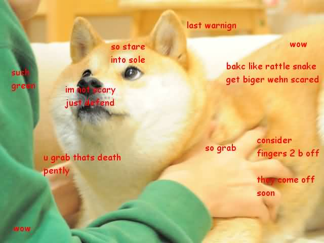 last warning so stare into sole such green I'm not scary just defend doge meme