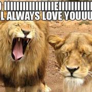 And iiiiiiiiiiiiiiiiiieiiiiiiii will always love yooooooooouuuuu Lion Meme