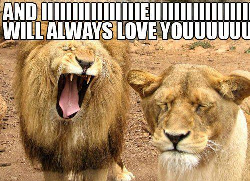 And iiiiiiiiiiiiiiiiiieiiiiiiii will always love yooooooooouuuuu Lion Meme
