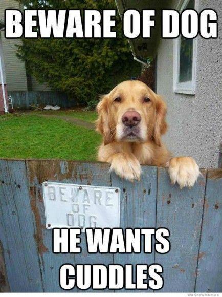 Beware of dog we wants cuddles Dog Memes