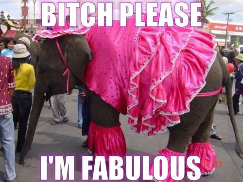 Bitch please I'm fabulous Elephant Meme