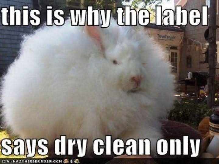 Bunnies Meme This is why the label says dry clean only