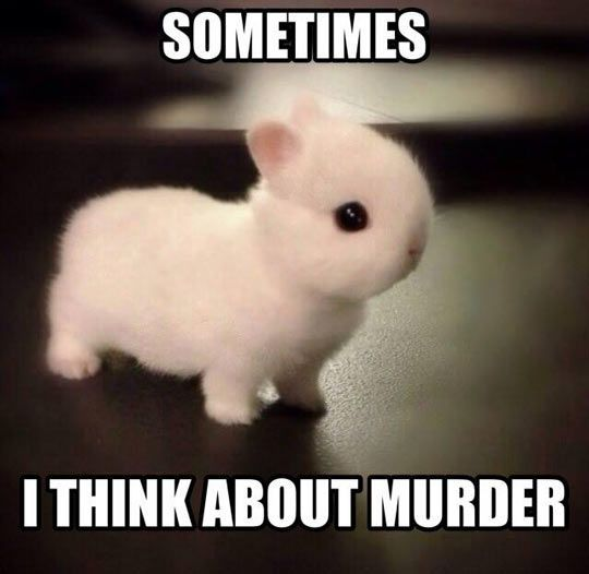 Bunnies Memes Sometimes i think about murder