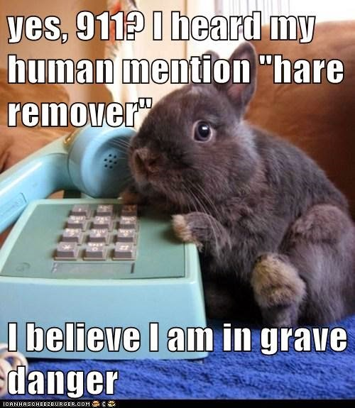 Bunnies Memes Yes 911 i heard my human mention