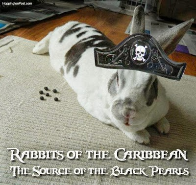 Bunnies Memes rabbits of the Caribbean the source of the black pearls