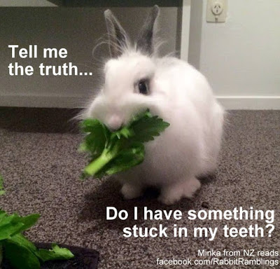 Bunnies Memes tell me the truth do i have