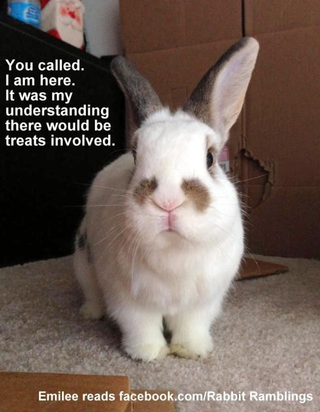 Bunnies Memes you called i am here it was my understand there would be treats involved