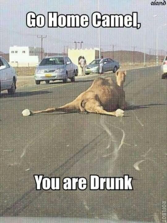 Camel Meme Go home camel you are drunk