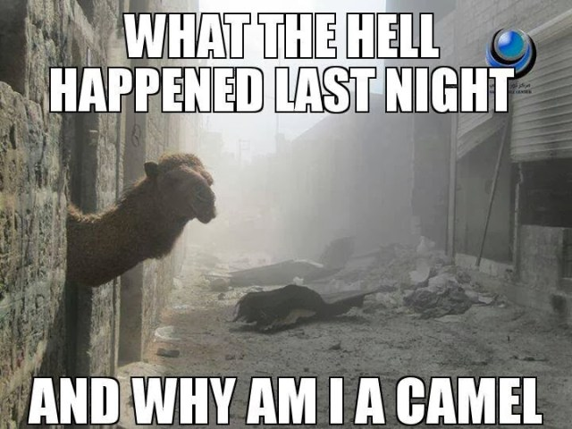 Camel Meme What the hell happened last night and way am i a camel