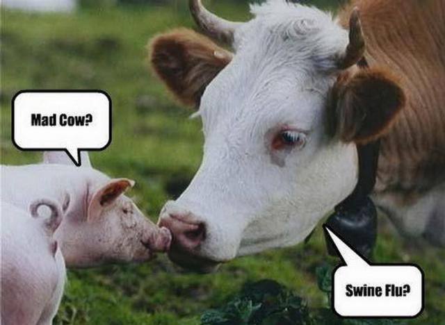 Cow Meme Mad cow swine flu