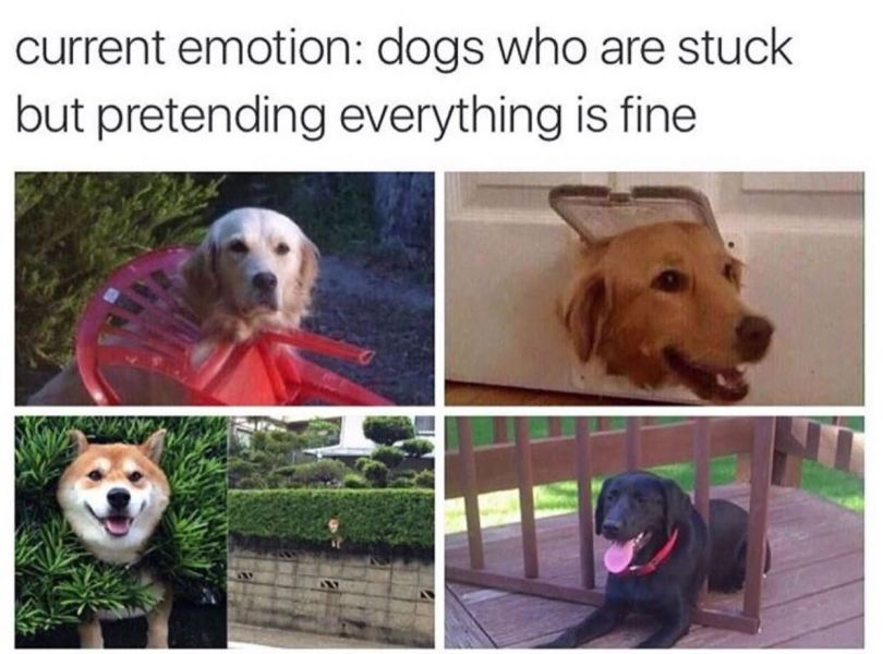 Current emotion dogs who are stuck but pretending everything is fine Dog Memes