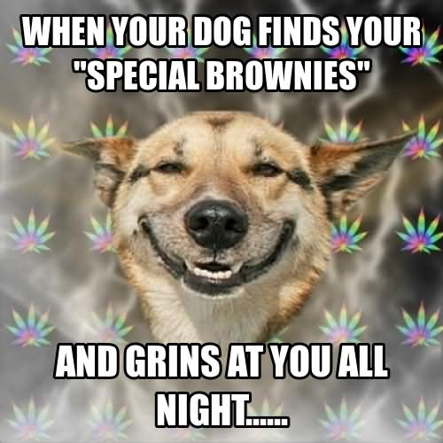 Dog Meme When your dog finds your special brownies