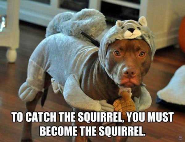Dog Meme to catch the squirrel you must become the