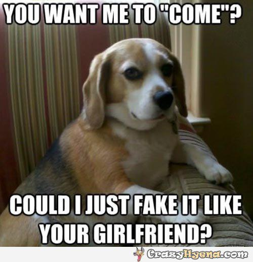 Dog Meme you want me to come could i just fake it