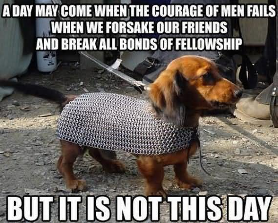 Dog Memes A day may come when the courage of men fails
