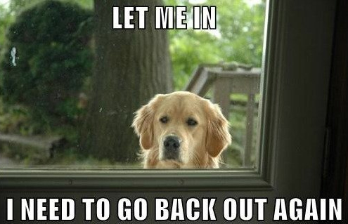 Dog Memes let me in i need to go back out again