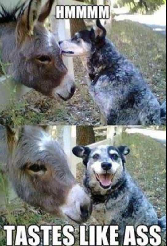 Donkey Meme Hmmm tastes like ass