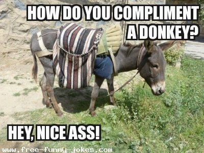 Donkey Meme how do you compliment a donkey