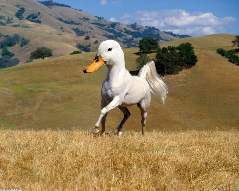 Duck Meme Funny