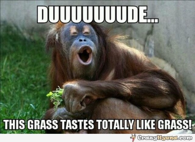 Duuuuuuuude this grass tastes totally like grass Monkey Memes