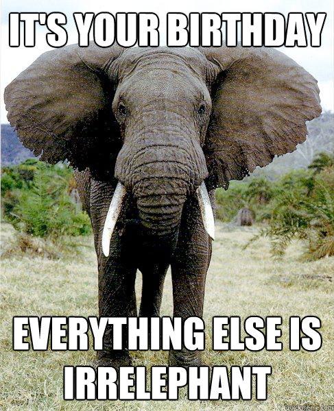 Elephant Meme Its your birthday everything else is irrelephant
