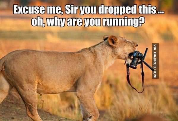 Excuse me sir you dropped this oh why are you Lion Memes