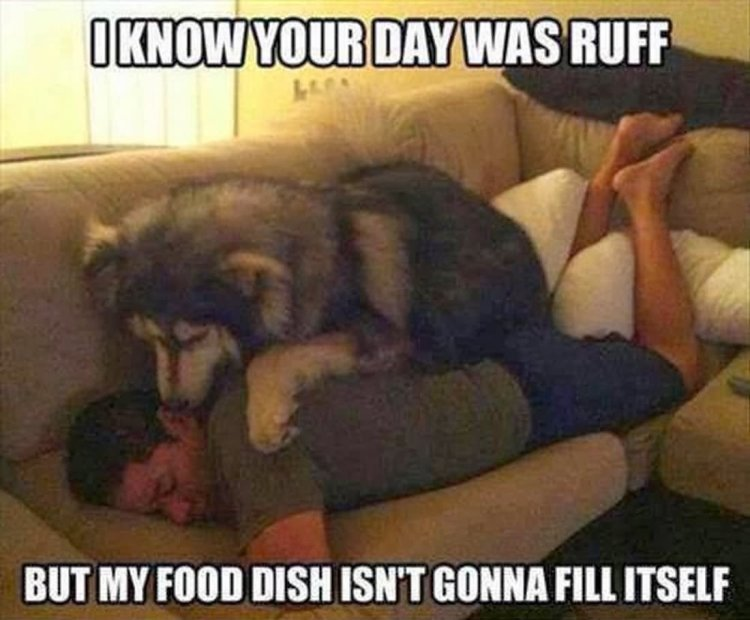 Food Meme i know your day was ruff but my food